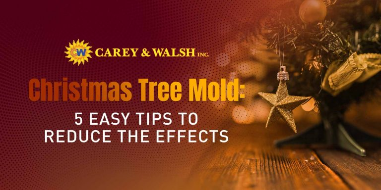 Christmas Tree Mold: 5 Easy Tips to Reduce the Effects